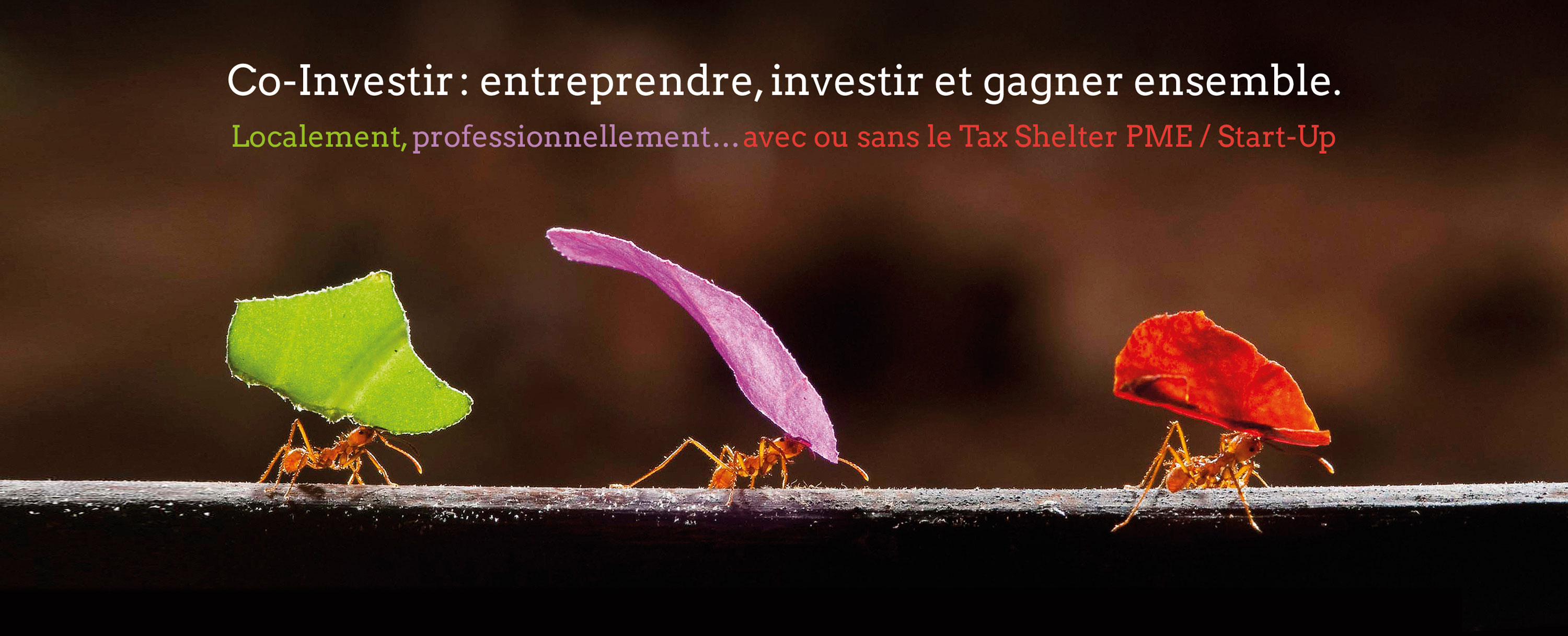 Co-investir, localement, professionellement